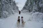 Lapplands Drag: Laufen, laufen, laufen...