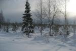 Lapplands Drag: Wälder, Flüsse, Moore - wohin das Auge reicht
