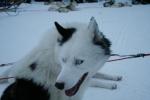 Lapplands Drag: Ike nach der Tour