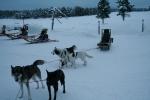 Lapplands Drag: Hugo und Holtan, dahinter Jack und Ike