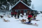 Lapplands Drag: Zurück auf der Farm