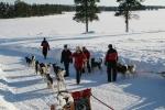 Lapplands Drag: Unmittelbar vor dem Start