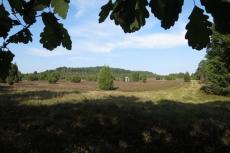 Lüneburger Heide - Steingrund