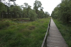 Lüneburger Heide - Pietzmoor