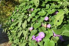 Lykien - Blüten im Herbst