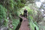 Madeira - Levada do Caldeirao Verde