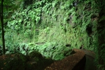 Madeira - Grüne Steilwand an Levada da Janela