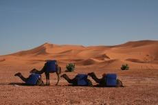 Marokko: Die Kamele warten schon