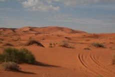 Marokko: Ein bisschen Grünzeug gibt es doch