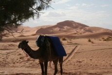 Marokko: Tolle Kulisse im Erg Chebbi