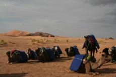 Marokko: Die Kamele können ausruhen