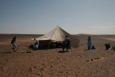 Marokko: Einziger Schattenspender
