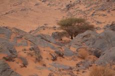 Marokko: Ein einsamer Baum