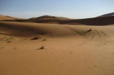 Marokko: Ab in die Wüste...
