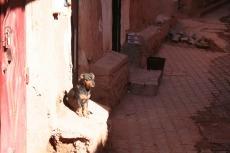 Marokko: Sonnenplätzchen