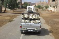Marokko: Geflügeltransport