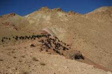 Marokko: Ziegen in spärlichem Grün