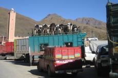 Marokko: Viehtransport mit Dachterrasse
