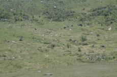Mongolei: Mongolische Wildpferde in der Ferne