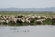 Mongolei: Viehtränke