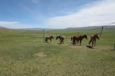 Mongolei: Pferdestall