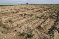 Mongolei: Bewässerte Felder