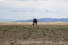 Mongolei: Kamel bei Khongoryn Els