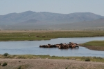 Mongolei: Pferde im Tuul