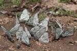 Mongolei: Schmetterlinge an einem kleinen Bach