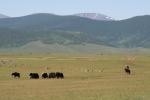 Mongolei: Yaks vor Dreitausendern