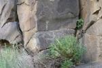 Mongolei: Felsenmalerei im Orkhon-Tal