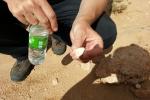 Mongolei: Knochenfragment eines Dinosauriers