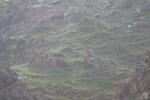 Mongolei: Steinböcke