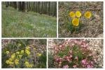 Mongolei: Blütenpracht