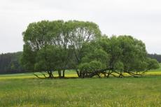 Naturpark Lahn-Dill-Bergland – Schauinsland