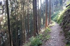 Natursteig Sieg #7 - Der besonders gefährliche Waldweg