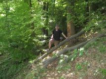 Natursteig Sieg #5 - Naturbelassene Wegführung