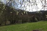 Natursteig Sieg #14 - Der Frühling kommt