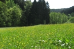 Natursteig Sieg #5 - Im Kaltbachtal