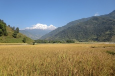Nepal - Reisfeld im Talgrund