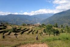 Nepal - Reisfelder