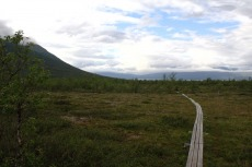Nordkap, Hurtigruten und Lofoten: Plankenweg im Abisko-Nationalpark