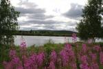 Nordkap, Hurtigruten und Lofoten: Idylle im schwedischen Lappland
