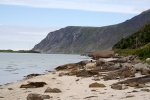 Nordkap, Hurtigruten und Lofoten: Strandschafe