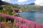 Nordkap, Hurtigruten und Lofoten: Kalle - einfach traumhaft