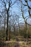 Halde Haniel – Köllnischer Wald und GipfelglückHalde Haniel – Köllnischer Wald und Gipfelglück