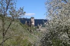 Rheinburgenweg #4 - Burg Fürstenberg
