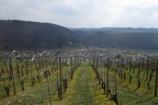 Rheinburgenweg #2 - Weinberge oberhalb von Winningen