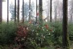 Rheinburgenweg #2 - Ein Weihnachtsbaum mitten im Wald