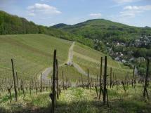 Rheinsteig #1 - Der erste Weinberg unterwegs